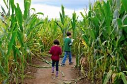 fall-corn-maze-2-kids