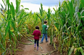 fall-corn-maze-2-kids